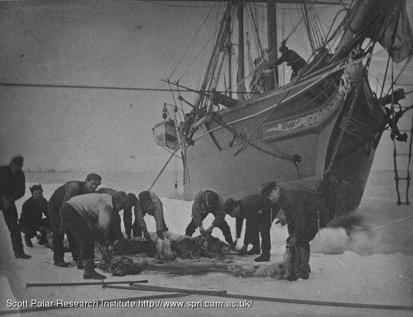 Leigh Smith Eira Expeditions 1880, 1881-82