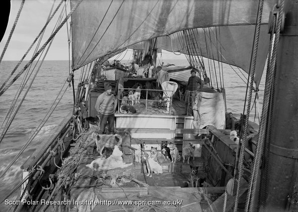 View of deck of Terra Nova with dogs from Engine Room hatch. Jan. 3rd 1911.