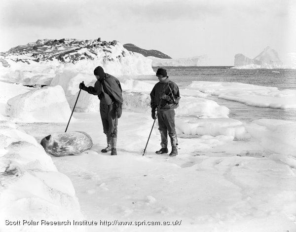 Hooper and Dimitri and a Weddell Seal at Cape Evans. March 1911