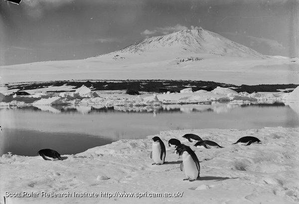 Erebus with Adleie (sic) penguins on ice in foreground and open water near the grotto berg. Jan. 5th 1911.