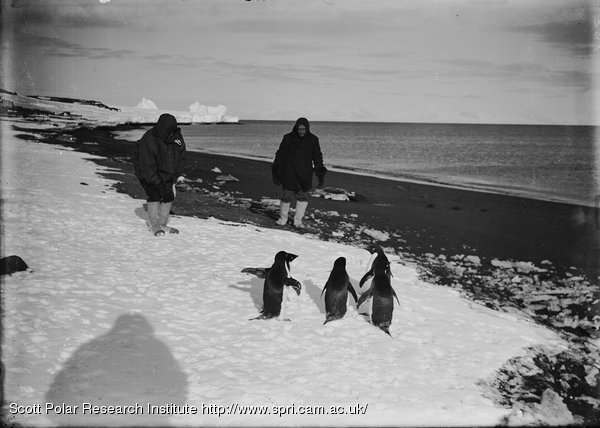 Rennick and Drake making friendly advances to Adelie penguins. Feb. 9th 1911.