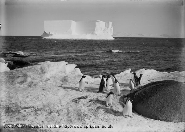 Penguins, and a berg at Cape Royds. Feb. 13th 1911.