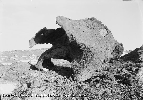 """Weathered Kenyte boulder near house. """"The Antarcticosauras"""". March 8th 1911"""