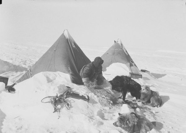 Polar ... & Freeze Frame » Shelter